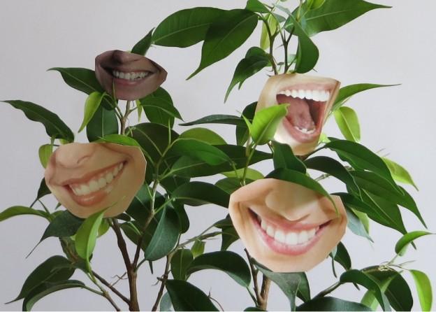 Test Parrot Flower Power Planzensensor - Lass Blumen sprechen