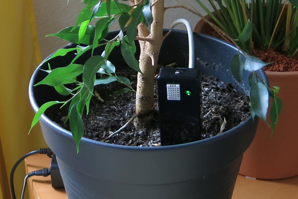 Strauchie-Bot Pflanzenüberwachung per E-Mail mit Arduino