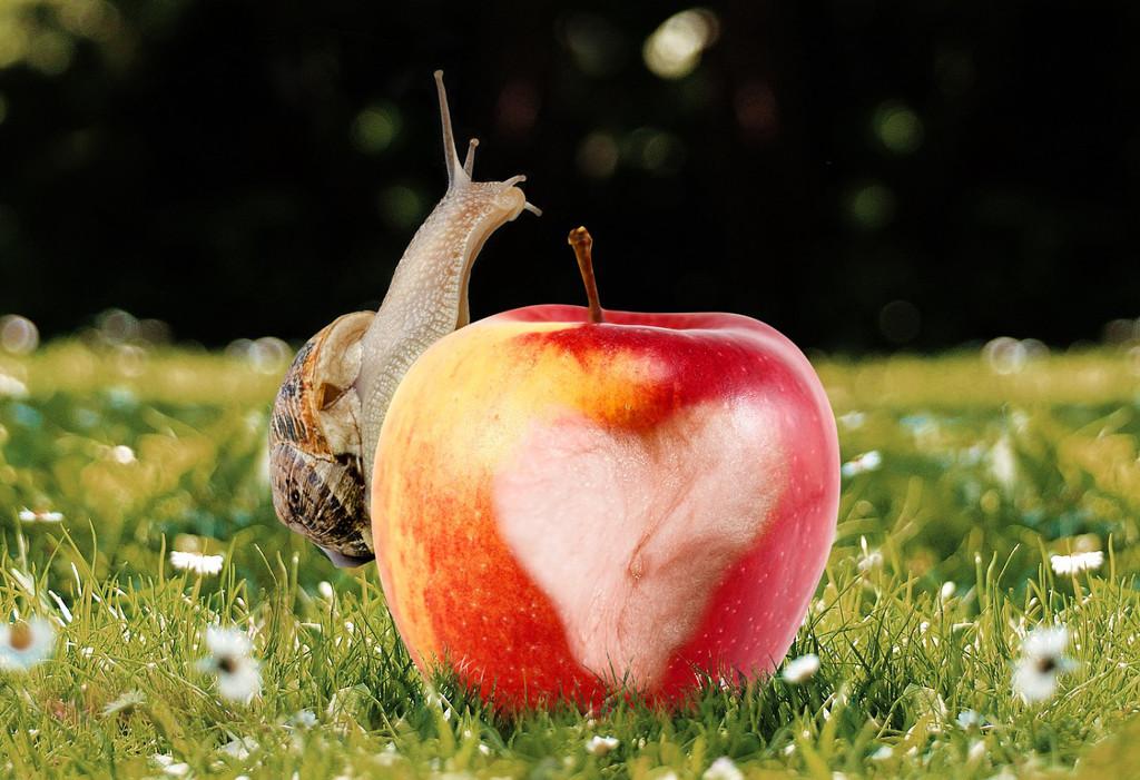 Langsamer gewordene Apple iPhone wieder schneller machen